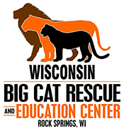 Big Cat Logo